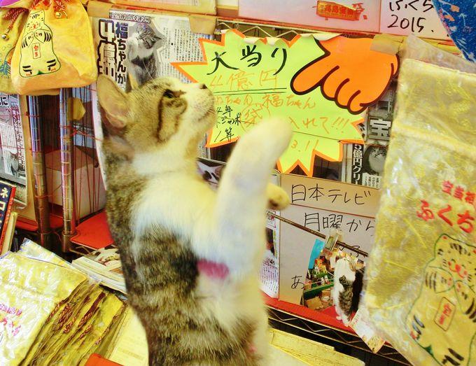 リアル招き猫を探せ!