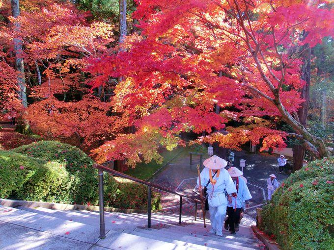 真っ赤な紅葉が見られる今熊野観音寺