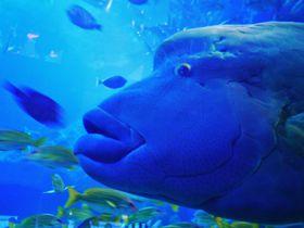 伊勢志摩・鳥羽水族館(トバスイ)で見たい海の生きものたち
