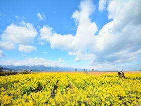 守山の菜の花を目と舌で楽しむ!セトレマリーナびわ湖のイタリアン