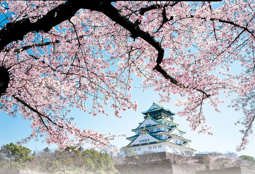 隣接する大阪城公園の桜が素晴らしい