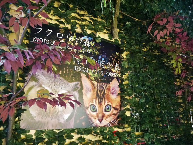 ヒョウ猫の森とフクロウの森