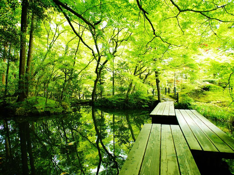 京都は青もみじの季節がおすすめ!新緑の南禅寺天授庵は穴場スポット