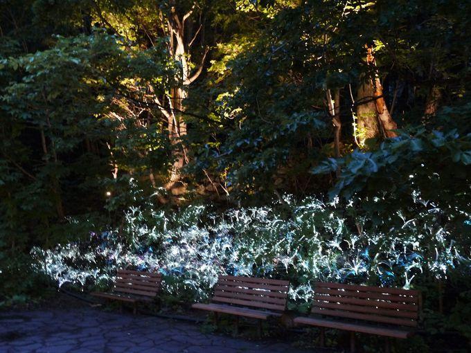 定山渓ネイチャールミナリエ 「光の回廊」から「光の森」へ