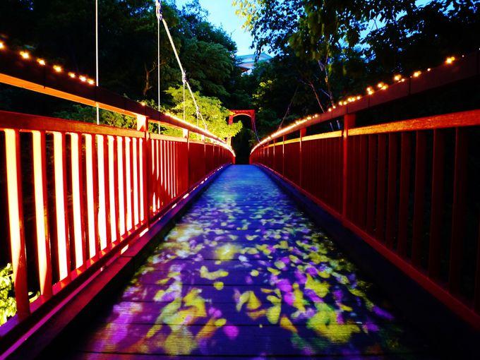 いつもとは全く違う光景「二見吊橋 光の路」