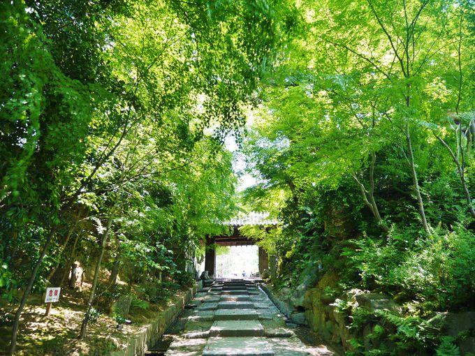 ねねと秀吉ゆかりの高台寺