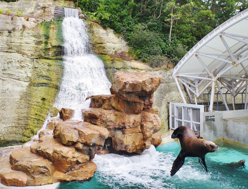 城崎温泉近くの観光スポット「城崎マリンワールド」の楽しみ方
