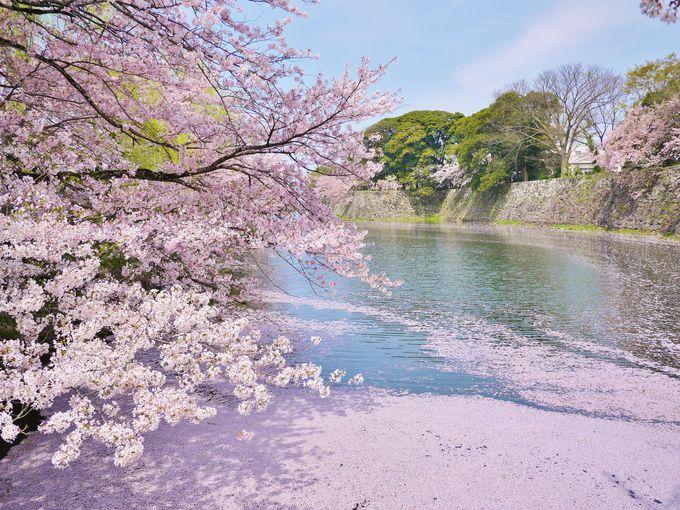 2018年の桜の開花・見ごろは早めの予想