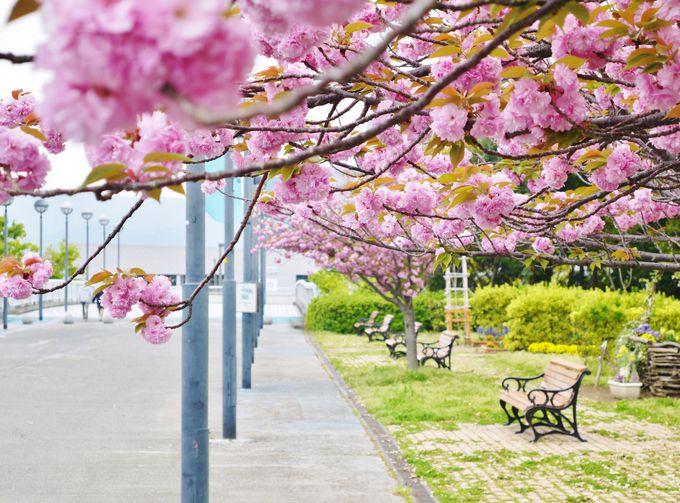 7. りんくう公園