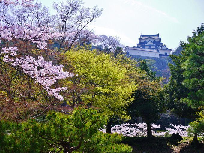 彦根城を雅に楽しむ