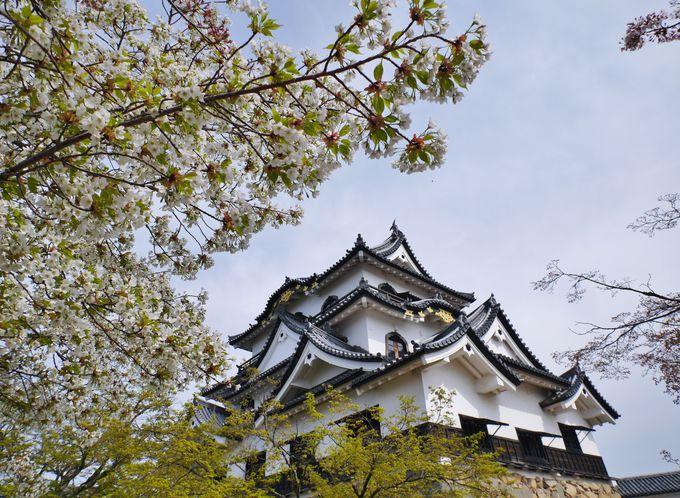 彦根城天守閣は待ち時間があるほどの人気?