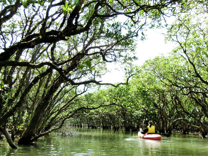 2日目はマングローブの森でカヌー体験!