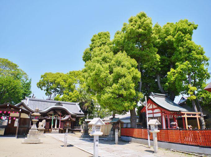 古来より女性は強し!「決断と行動の神様」を祀る姫嶋神社