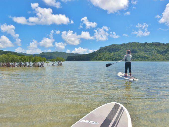 西表の大自然を「ボートシュノーケリング」&「SUP」で楽しむ!