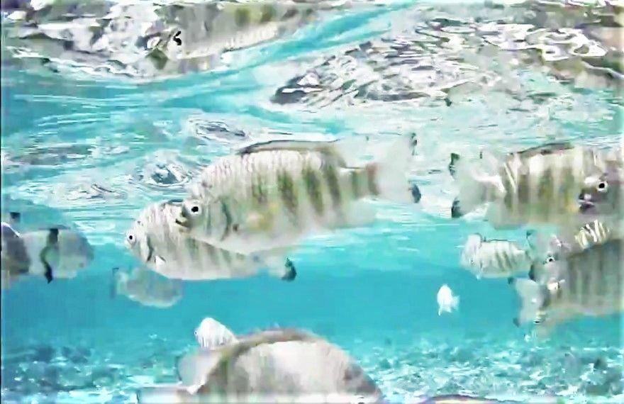 透明度が高くお魚イッパイのイパオビーチ
