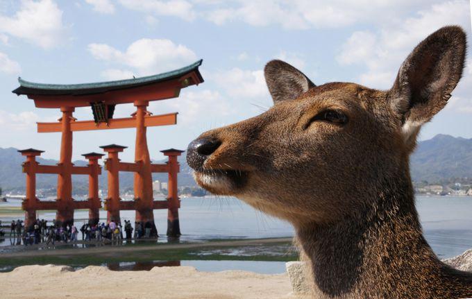 広島観光2日目午後:宮島観光