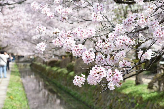 「京都山科 ホテル山楽」の朝ごはんは特別なんです!