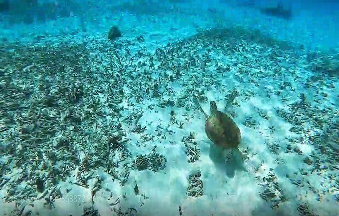 「百合ヶ浜」が出現しなくても与論島を満喫できるアクティビティ