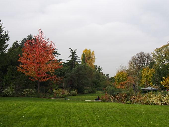 長旅で疲れた体のコリも、アクリマタシオン庭園で解消!