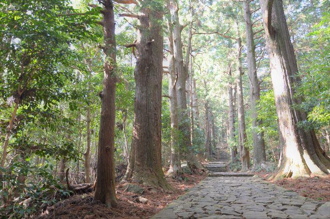 巨木が立ち並ぶ森の古道を抜けて聖地・那智山へ!