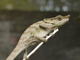 爬虫類好きはたまらない!?マダガスカル「カメレオンファーム」