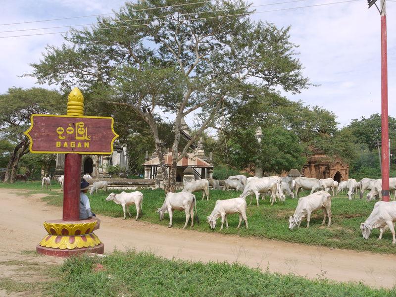 ミャンマーの世界遺産「バガン」でオールドバガンをのんびり巡ろう