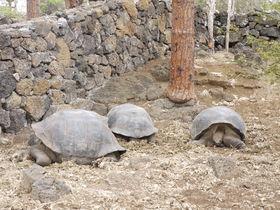 ガラパゴス諸島を満喫しよう!「サンタ・クルス島」の観光名所4選