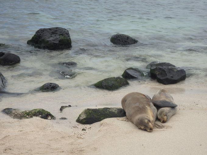 アシカとイグアナが戯れるビーチ「プンタカローラ」