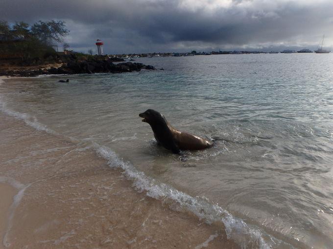 アシカと泳げるビーチ「プラヤマン」