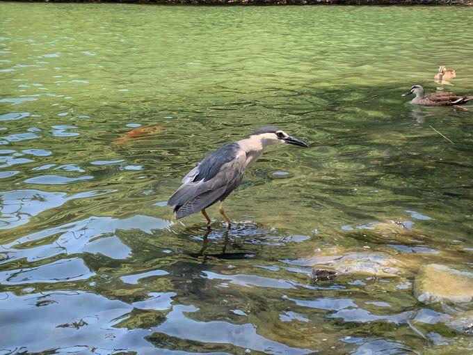 大自然の絶景!海花湖の見どころスポット紹介