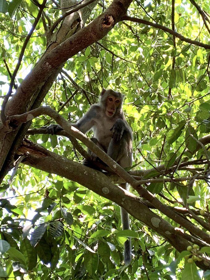 野生の猿に遭遇できる!サイクリングロード