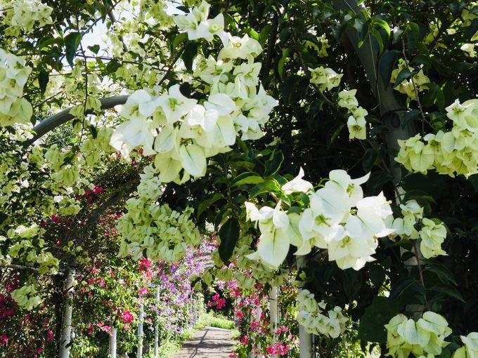 ロマンチックな花園フォレストスポット!