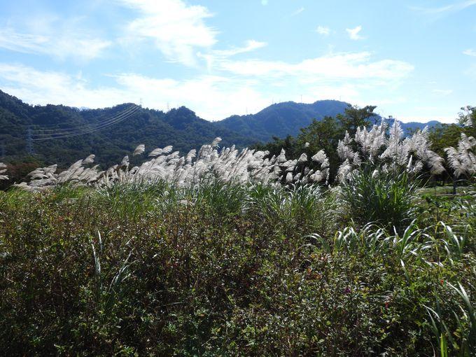 花海農場!秋冬の景色を満喫