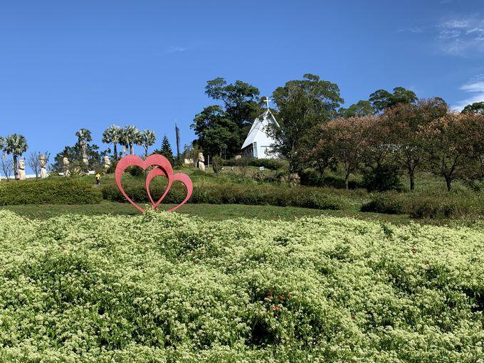 大自然の絶景「花海農場」とは?