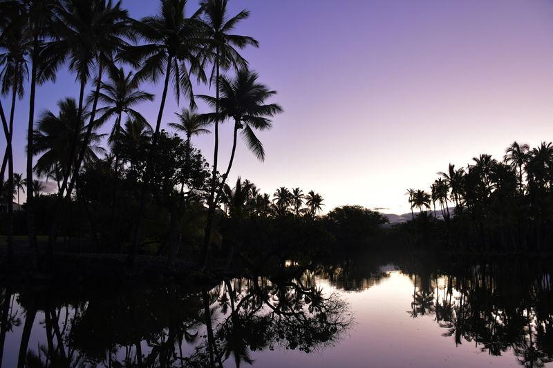 天国に手が届く丘!ハワイ島「マウナラニ」で極上リトリートの旅