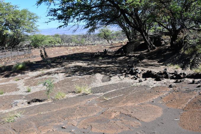 古代ハワイアンの遺跡「プアコ・ペトログリフ」