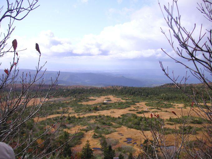 絶景!!階段から見る一面広がる湿原(秋)