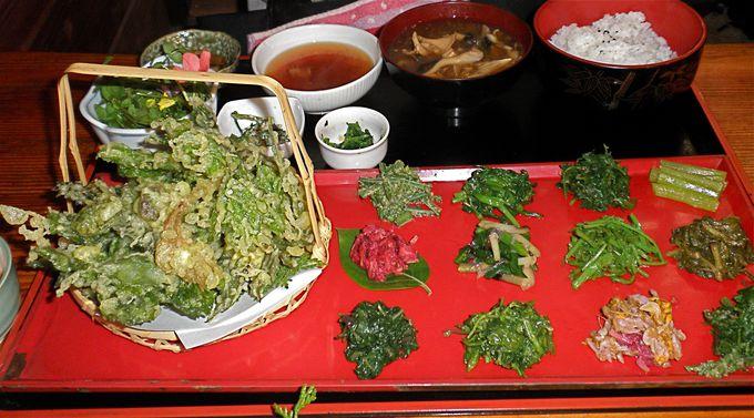春に行ったら絶対「山菜」がおすすめ!