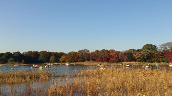 『ボートに乗りながらも楽しめる水辺の紅葉』