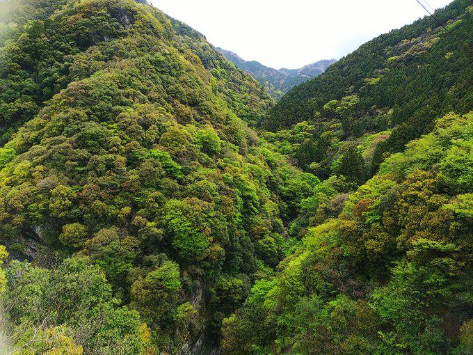 止呂橋から見る深い峡谷