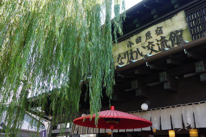 小田原城下町で、地産地消を極めた木桶ラーメンを!