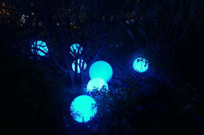 光のアート散策「NIGHT WALKING」
