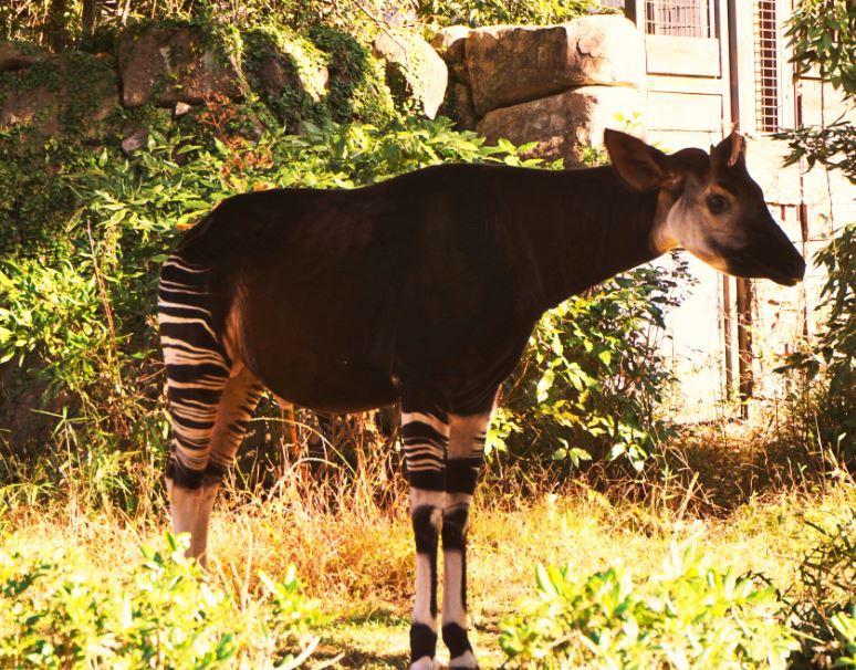 人気動物から希少動物まで!森の動物園・横浜「金沢動物園」