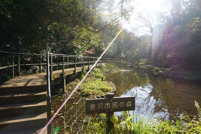 自然と歴史が楽しめるハイキングコース
