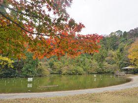 横浜から鎌倉・天園までハイキング!「六国峠ハイキングコース」