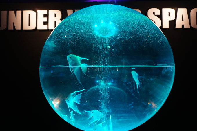 宇宙旅行できる水族館が横浜に期間限定で登場!