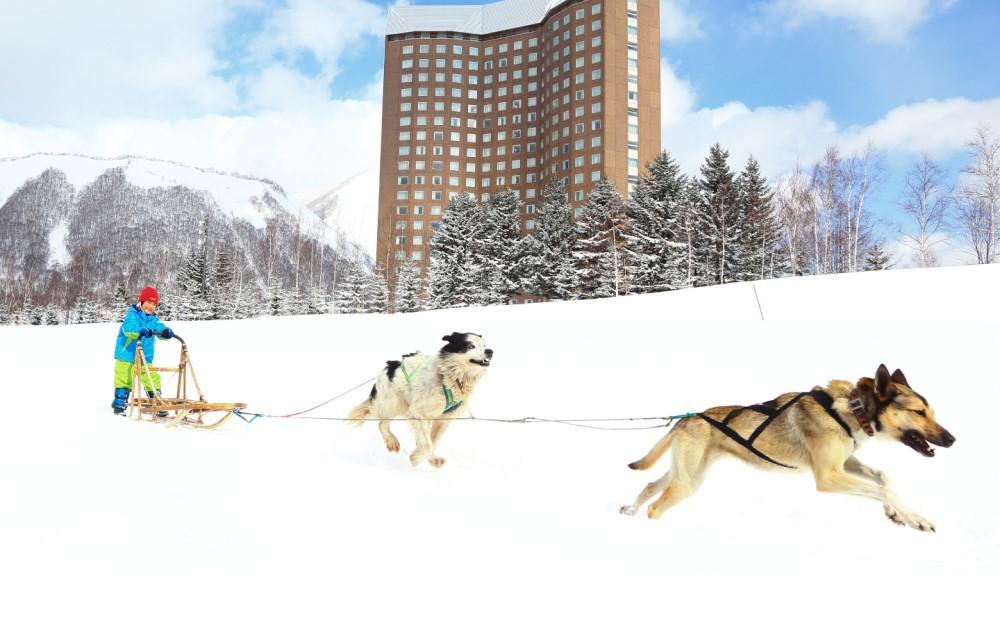 犬ぞり、アイスフィッシングなど、北海道ならではのダイナミックなアクティビティ