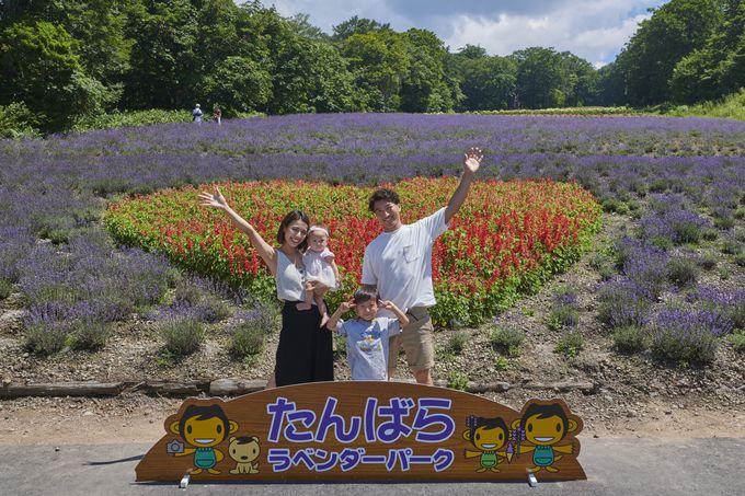 首都圏から2時間!関東最大級5万株のラベンダーが咲く紫の楽園