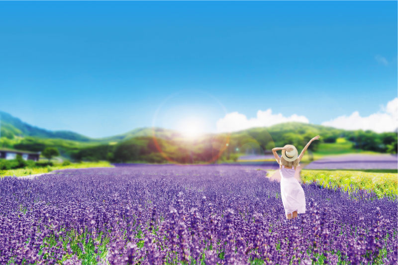 標高1,350mのお花畑「たんばらラベンダーパーク」平均最高気温25度の清涼空間へ!