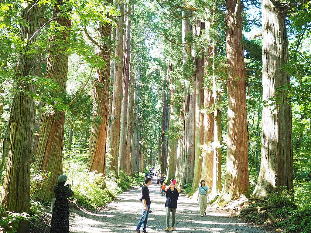 500m続く杉並木を抜け、奥社&九頭龍社へ